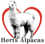 Herts Alpacas, www.hertsalpacas.co.uk - Click to visit