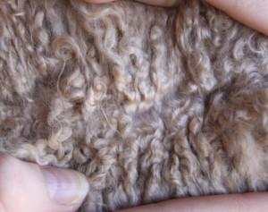 Petra fleece